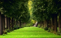 the-natural-summer-forest-green-grass-path_1920x1200
